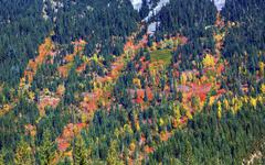 Fall colors mountain sides forest stevens pass leavenworth washington Stock Photos