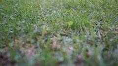 Crane shot between grass free - stock footage