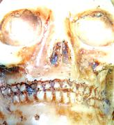 Skull with teeth and eye orbits Stock Photos