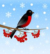 bird a bullfinch sits on the branch of tree with the berries of wild ash - stock illustration