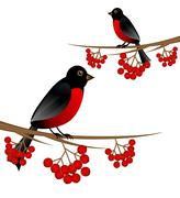 Branch tree with berry wild ash and bird bullfinch Stock Illustration