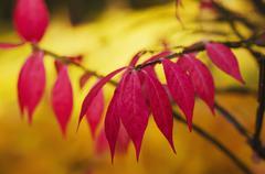 Autumn purple plant - stock photo