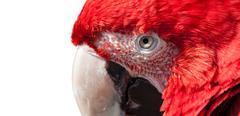 Bird close up Stock Photos