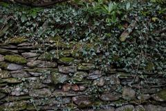 overgrown wall - stock photo