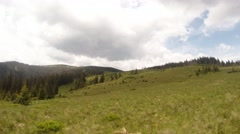 Herd of cows grazing on a green field in mountain Highest European mountains Stock Footage