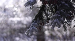 Icy Winter backdrop Stock Footage