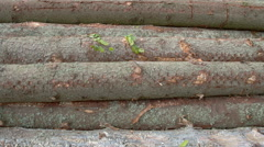 The body of the logs from the spruce trees fs700 4k Stock Footage