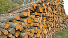 Tall heaps of the grey alder logs ready for transport fs700 4k Stock Footage