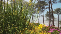 Tracking wide shot of wild spring flowers,Cape Town Stock Footage