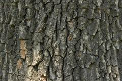 Background Of Bark Tree Stock Photos