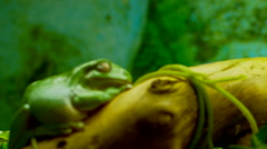 Tropical frog Stock Footage