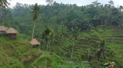 Tegalalang rice terrace in Bali Stock Footage