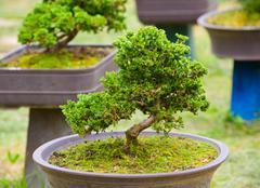 green bonsai trees - stock photo