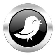 Twitter black circle glossy chrome icon isolated. Stock Illustration