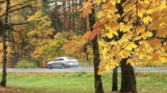 Road rain autumn Stock Footage
