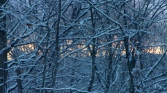 Winter - Snow Storm - Sunset Through Snow Covered Trees Stock Footage