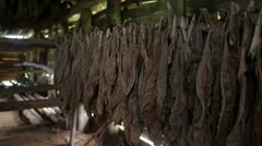 Tobacco drying in Barn in Cuba Stock Footage