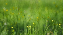 Meadow grass with yellow flowers Stock Footage