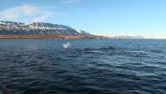 Humpback Whales Diving Stock Footage