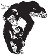 chimpanzee with baby black white - stock illustration