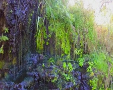 Stock Video Footage of Fresh spring streams, green leaves, nature awakening. Slow-mo, click for HD