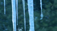 Winter - Icicle Dripping Background Trees Pan Down Stock Footage