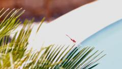 Dragonfly sitting on a branch of a palm tree above the water basin Stock Footage