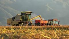 4k agriculture and harvester transfering fresh rice, wheat in tractor at suns Stock Footage