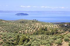Olive groves on the Aegean coast. - stock photo