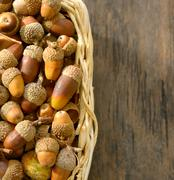 basket full of acorns - stock photo