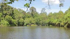 Sandakan Rainforest Lake Borneo Malaysia Stock Footage