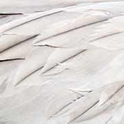 Bird feathers Stock Photos