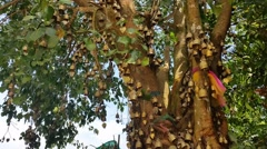 Buddhist Bells in tree at Phuket's Big Buddha Thailand Stock Footage