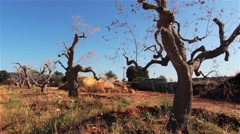 Trees in Dry Environment Stock Footage
