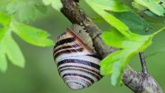 Snail with parasites Stock Footage