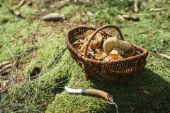 Wickered basket of wild edible mushrooms standing on moss-grown soil Stock Photos