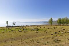 Stock Photo of Turkey, Anatolia, Eastern Anatolia Region, Bitlis Province, near Tatvan, Lake