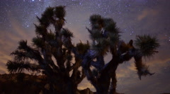 4K Motion Controlled Dolly Time Lapse of Milky Way & Joshua Tree Stock Footage