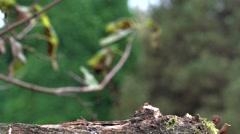 Chestet tit in autumn - slow motion Stock Footage