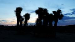 Time Lapse of Joshua Tree at Sunrise in Desert -Tilt Up- Stock Footage