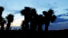 Time Lapse of Joshua Tree at Sunrise in Desert -Pan Left- Stock Footage