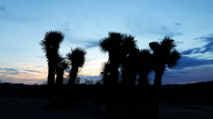 Time Lapse of Joshua Tree at Sunrise in Desert -Zoom In- Stock Footage