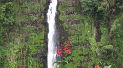 Akaka Falls, tropical flower Stock Footage
