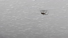 Spider walking across the white ceiling Stock Footage