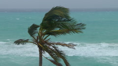 Approaching hurricane palm tree sways Stock Footage