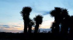 4K Time Lapse of Joshua Tree at Sunrise in Desert -Pan Right- - stock footage