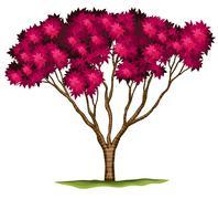 A bloodgood Japanese maple plant - stock illustration