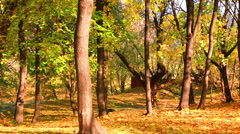 Beautiful leaf fall in autumn park in a sunny day - stock footage