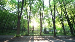 Sun rays breaking through green trees in park on summer day - stock footage