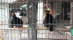 Is the bird in a cage Stock Footage